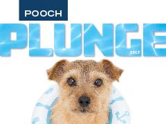Spotlight image: Pooch Plunge - Save the Date!