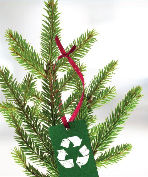 Spotlight image: Still Looking to Recycle Your Tree?