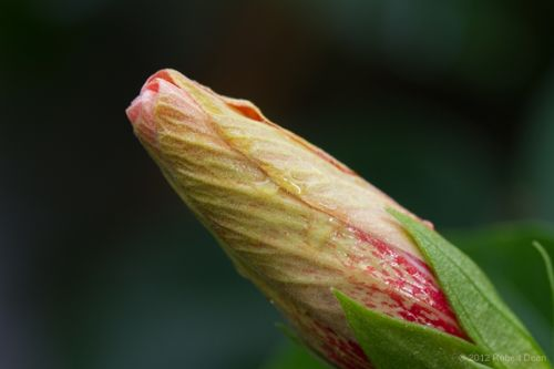 Macro Photography in the Gardens