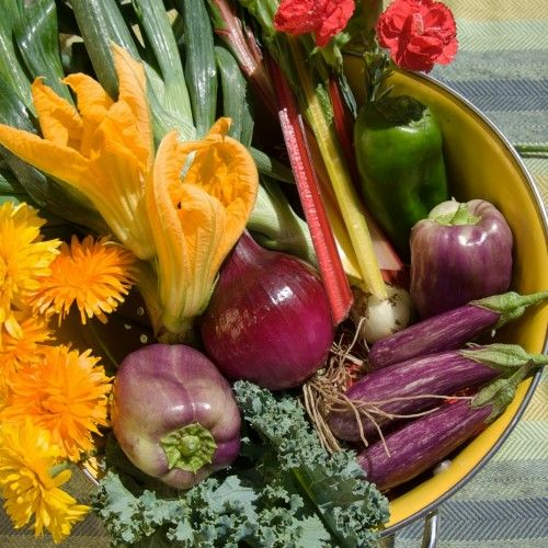 Vegetable Troubleshooting: Managing Pests and Diseases