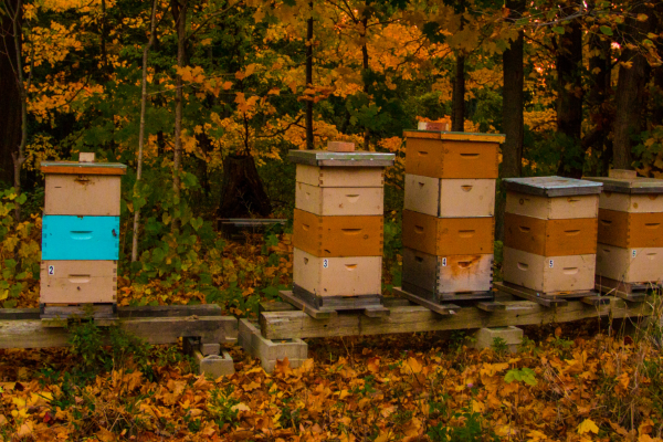 bee hives in fall