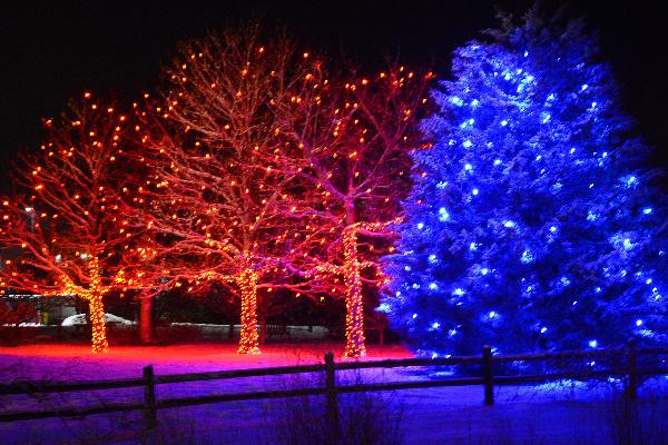 trees lit up with holiday lights