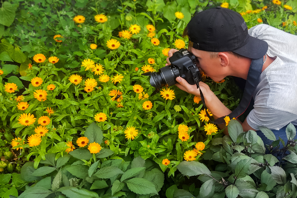 person taking photos of flowers