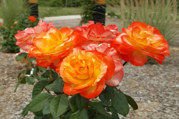 Specialty gardens including rose, butterfly/hummingbird, moon, fragrance, and Plant Select