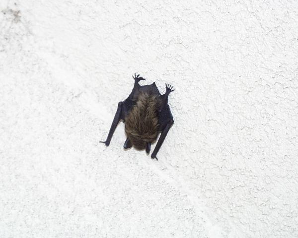 The Benefits of Bats