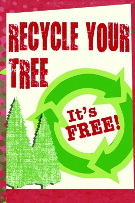 image for press release Make a Difference by Recycling Your Christmas Tree