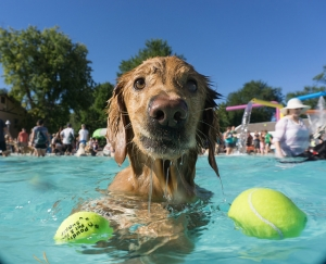 image for press release City Park Pool Closed for Summer, But Not Before Dogs Get Their Day