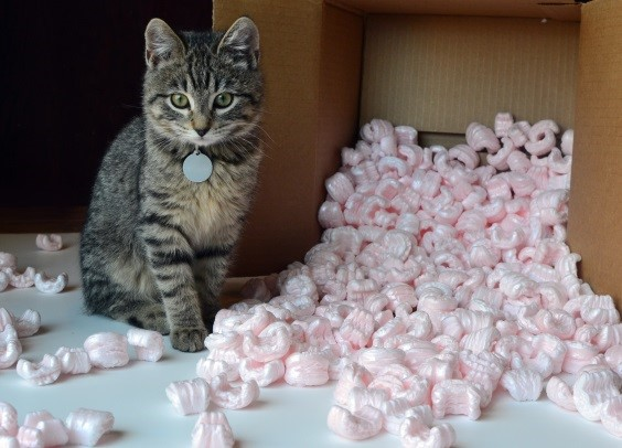 Styrofoam & Packing Peanuts