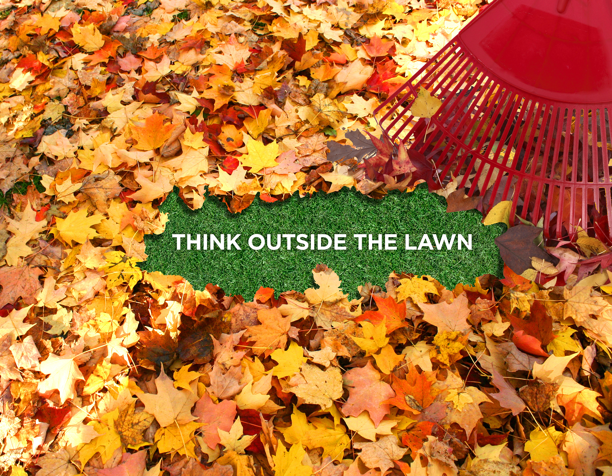 Leaves in Yard - Think Outside the Lawn